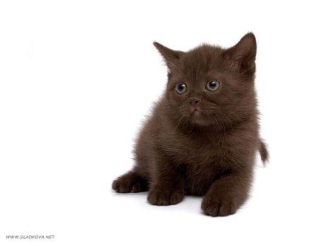 027_cats