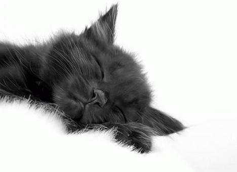 animals_naptime_010
