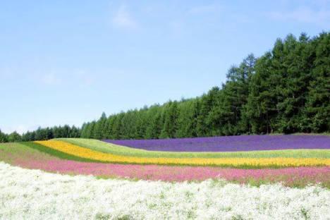 campo colorato