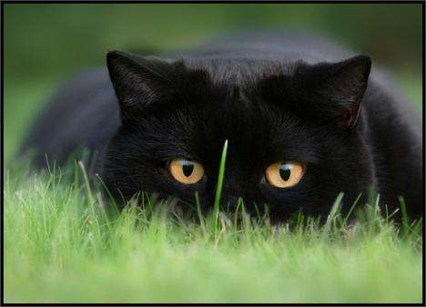 cats-028