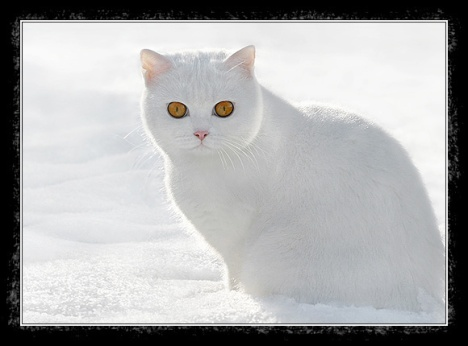 cats-049