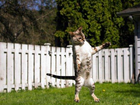 flying-cat10