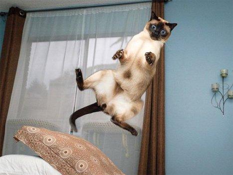 flying-cat18