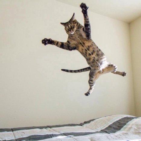 flying-cat3