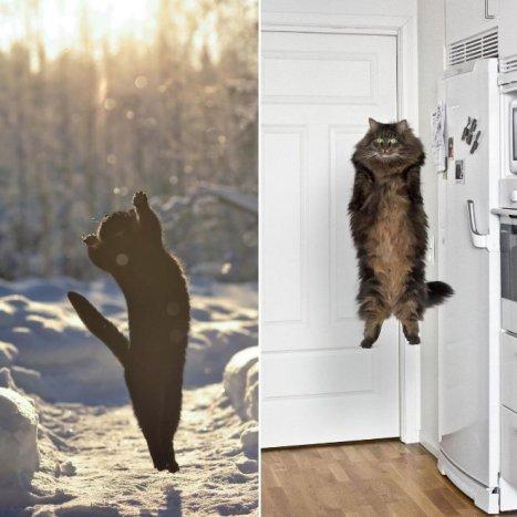 flying-cat4
