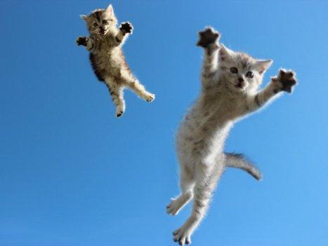 flying-cat8