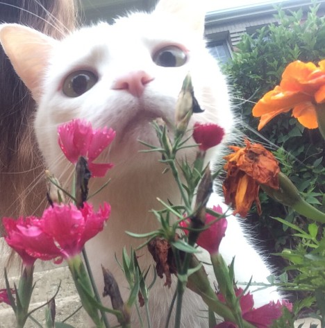 funny_animals_04362_020