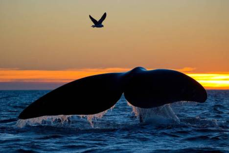 beautiful_whale_photography_640_13
