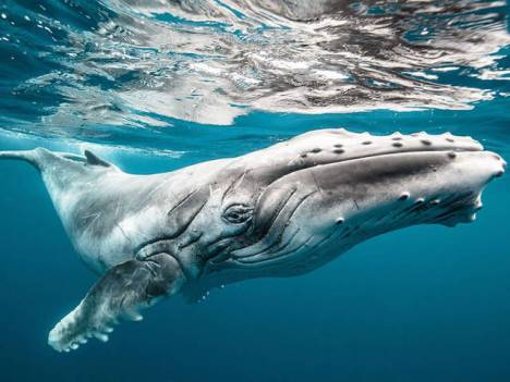 beautiful_whale_photography_640_14