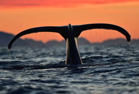 beautiful_whale_photography_640_23