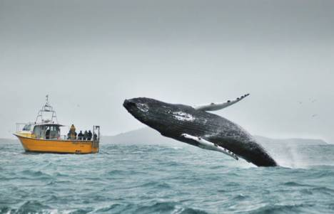 beautiful_whale_photography_640_27