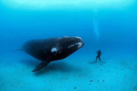 beautiful_whale_photography_640_29