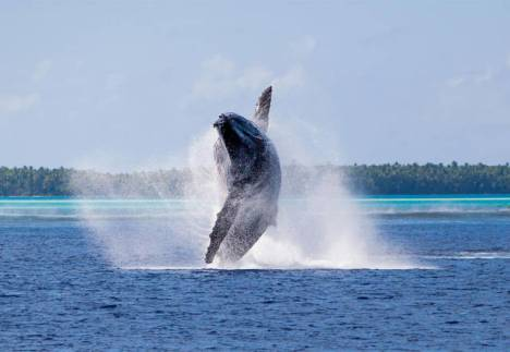beautiful_whale_photography_640_33