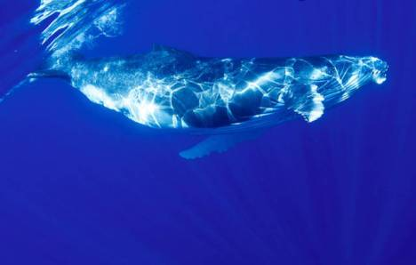 beautiful_whale_photography_640_37