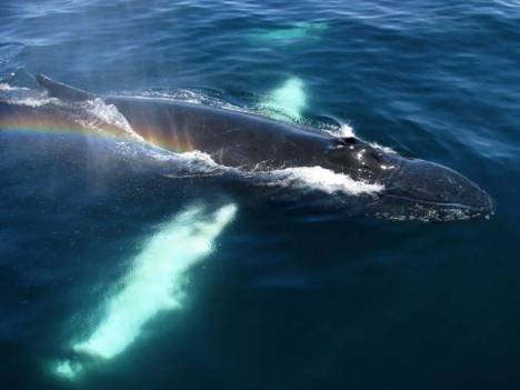 beautiful_whale_photography_640_40