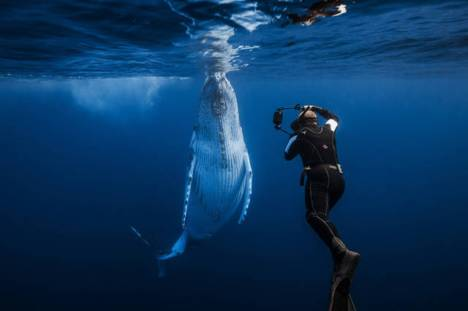 beautiful_whale_photography_640_43