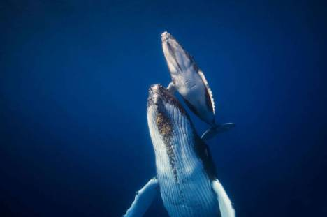 beautiful_whale_photography_640_45