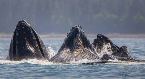 beautiful_whale_photography_640_46