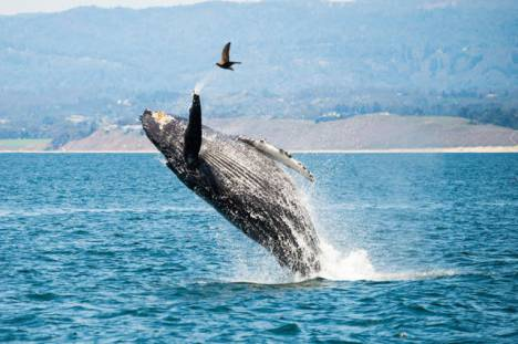 beautiful_whale_photography_640_50