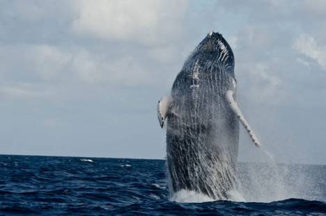 beautiful_whale_photography_640_52
