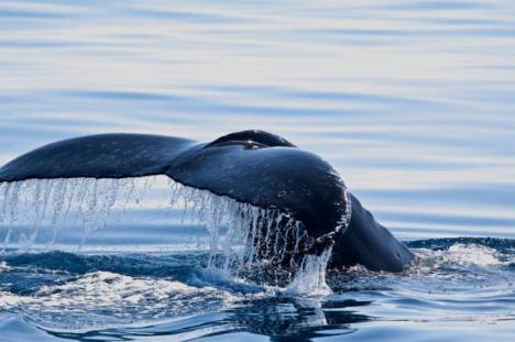 beautiful_whale_photography_640_54