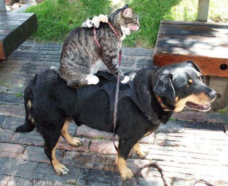 cane, gatto, topo