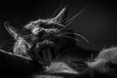 cat-black-and-white-photography-22