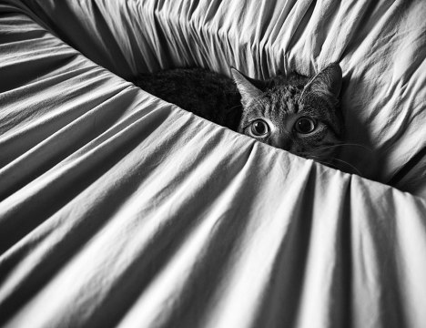 cat-black-and-white-photography-39