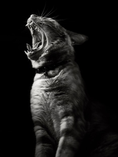 cat-looking-at-you-black-and-white-photography-1011