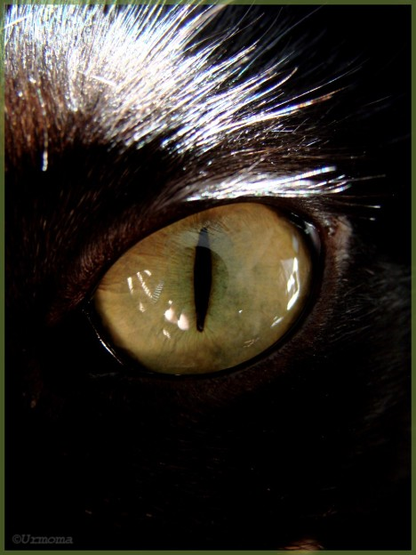 Cat__s_Eye__by_UrMoMa.jpg