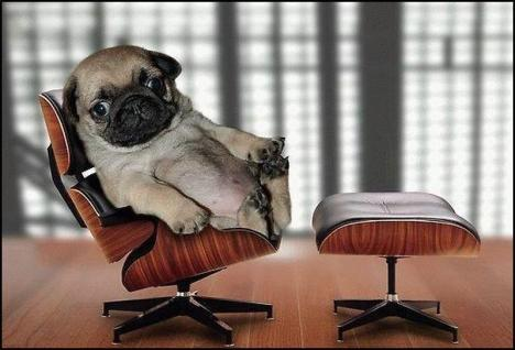 CEO (Doggy Style).