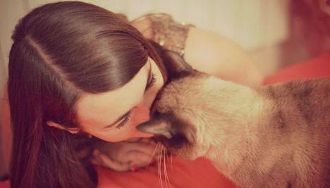 coccole-gatto