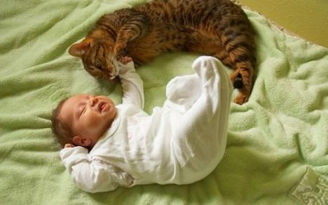 gatto-neonato.600
