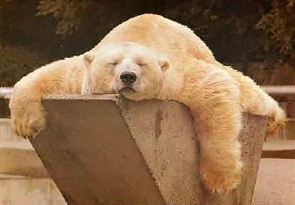 oso en relax