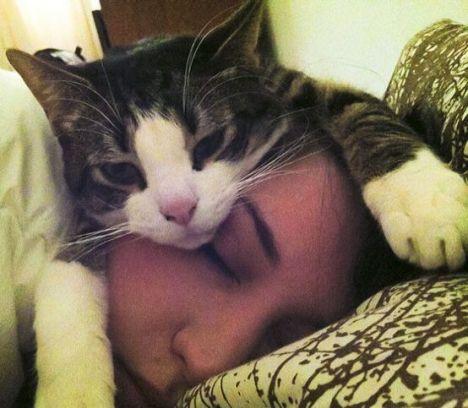 perche-i-gatti-dormono-nel-letto-degli-umani
