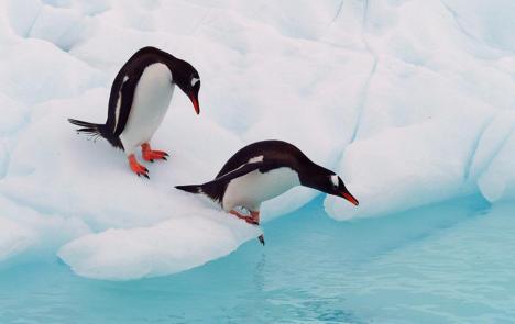 pinguini che si fanno il bagnetto