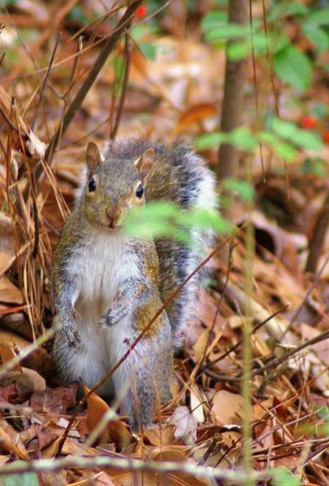 squirrels_014