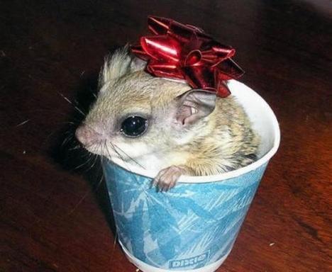 topolino...regalo