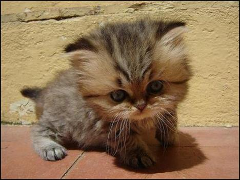 World s Cutest Kitten [800x600]