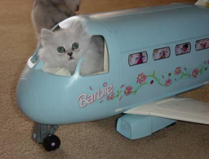 1171893087-barbieplane.b