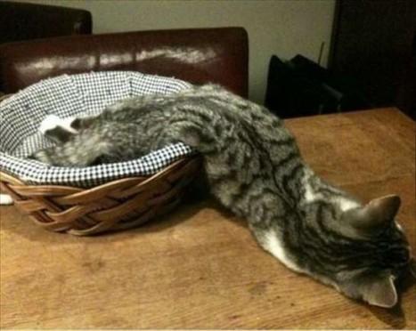 immagini-che-provano-che-i-gatti-siano-liquidi-cesto.jpg