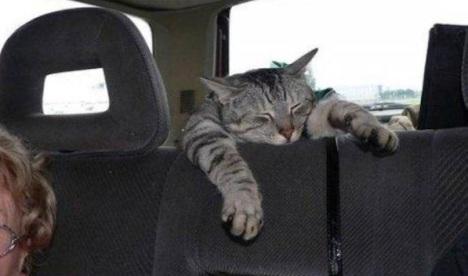 viaggiare-con-gatto