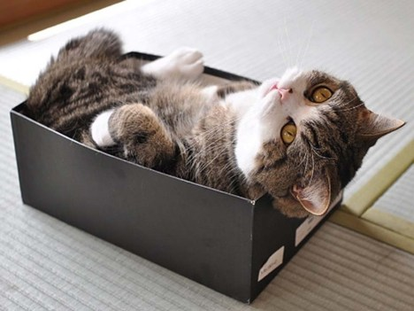 10-gatti-pic3b9-famosi-di-internet-1