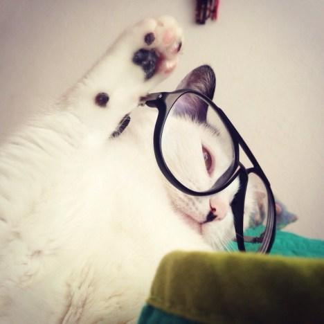 funny_animals_4812_002