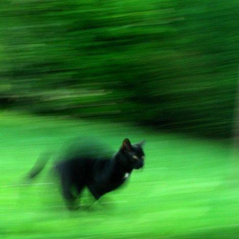 gatto bionico