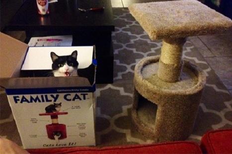 gatto-dentro-scatola