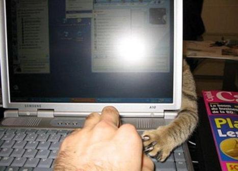 gatto zampetta ....