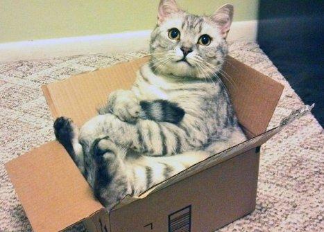 gatto_scatola