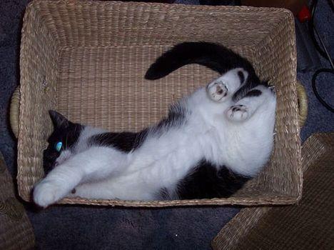 pratici-e-comodi-modi-per-riposare-in-una-scatola-gatto1