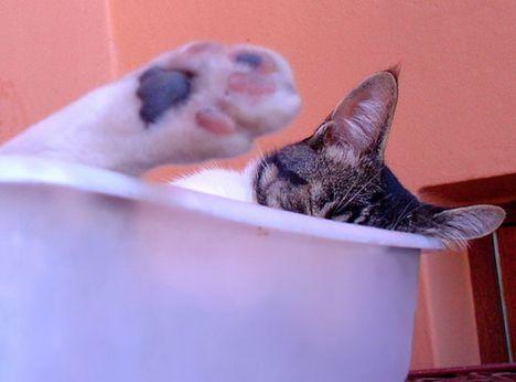 pratici-e-comodi-modi-per-riposare-in-una-scatola-gatto11
